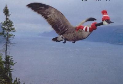 Noruega encuentra (por fin) la solución a la gripe aviar