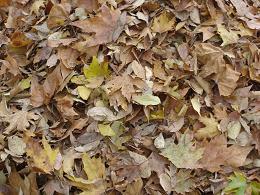 ... y un cachito de otoño
